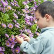 Child in the garden — Stock Photo #22896036