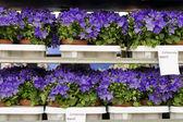 Flores para la venta — Foto de Stock