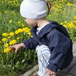 Stock Photo: Spring child with dandelions