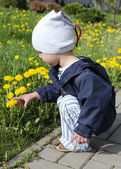 Spring child with dandelions — Stock Photo