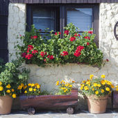 Cottage house with flowers — Stock Photo