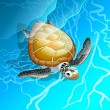 Royalty-Free Stock Vector: Turtle
