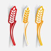 Ears of wheat — Stock Vector