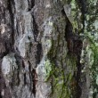 Texture of old tree rind — Stock Photo