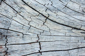 Old Stump Crack Texture. — 图库照片