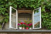 Stare okna obszarów wiejskich — Zdjęcie stockowe