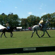 Polo Match in Aiken, SC. — Foto de Stock