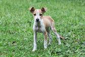 Cute puppy on grass — Stock Photo