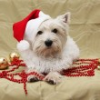 Stock Photo: Cute dog christmas card