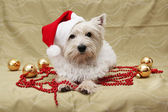 Cute dog christmas card — Stock Photo