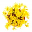 Stock fotografie: Yellow wild flowers