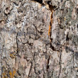 Stock Photo: Old tree bark background