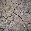 Cracks on earth background — Stock Photo