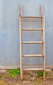 The old ladder against the wall — Stock Photo