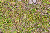Green grass and dry leaves background — Stock Photo