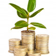 Money growth — Stock Photo #26460173