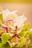 Wedding rings on a bouquet of orchids — Stok fotoğraf