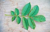 Le foglie di noce sul bordo — Foto Stock