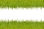 Green grass side view — Stock Photo