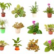 Set indoor plants on white background — Stock Photo