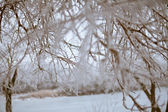 Icy tree branches — Stockfoto