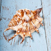 Seashell on a wooden background — Zdjęcie stockowe