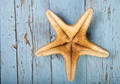 Inverted starfish on wooden background — Stock Photo