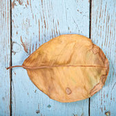 Dry leaf ficus on wooden boards — Stock Photo