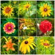 Collage of spring flowers in the flowerbed — Stock Photo #41596139