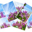 Stock Photo: Collage postcard with lilac