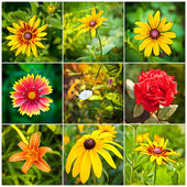 Collage of spring flowers in the flowerbed — Stock Photo