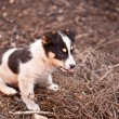 Puppy dog on green grass, shallow depth of field — Stock Photo #47121265