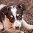 Puppy dog on green grass, shallow depth of field — Stock Photo #47121279