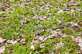 Herbage background on the ground — Stock Photo