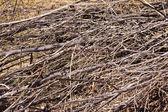 Сухая трава фон — Стоковое фото