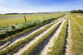 Ridgeway Path on Marlborough Downs — Stock Photo