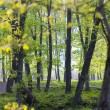 Backlit Forest — Stock Photo