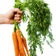 Holding a bunch of carrots — Stock Photo