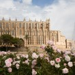 Cathedral in Palma, Majorca — Stock Photo #21793993