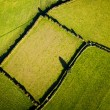 Field from above — Photo