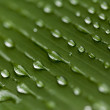 Water drops on a green leaf — Stock Photo