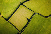 Field from above — Stock Photo