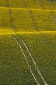Золотой урожай — Стоковое фото