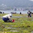People Collecting Shellfish, Miyajima, Japan - Stock Photo
