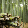 Harvested Bamboo in Forest — Stock Photo #22527287