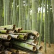 Harvested Bamboo in Forest — Stock Photo