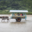 Tourists on Cart Pulled by Water Buffalo, Japan — Stock Photo