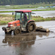 Tractor Prepares Rice Paddy — Stock Photo