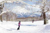 Snowboarding through Trees in Niseko, Japan — Stock Photo
