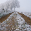 Stock Photo: Frozen farm track